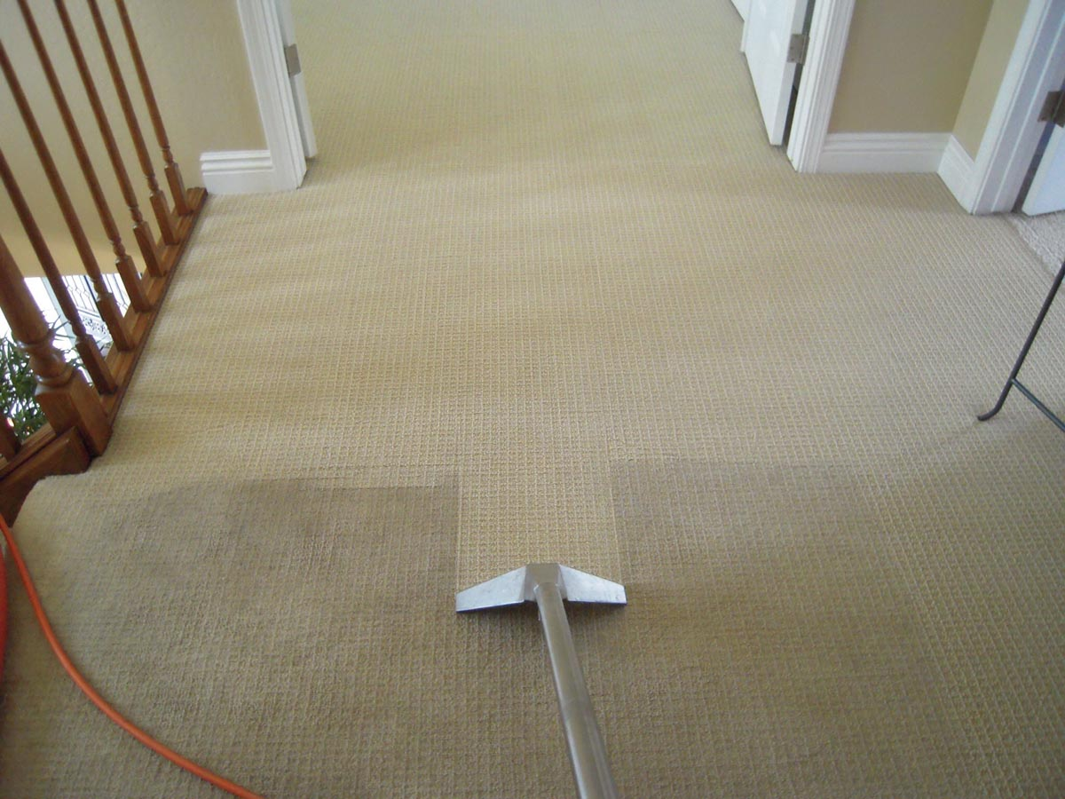 Carpet Cleaning Wakefield Carpet Upholstery Cleaners